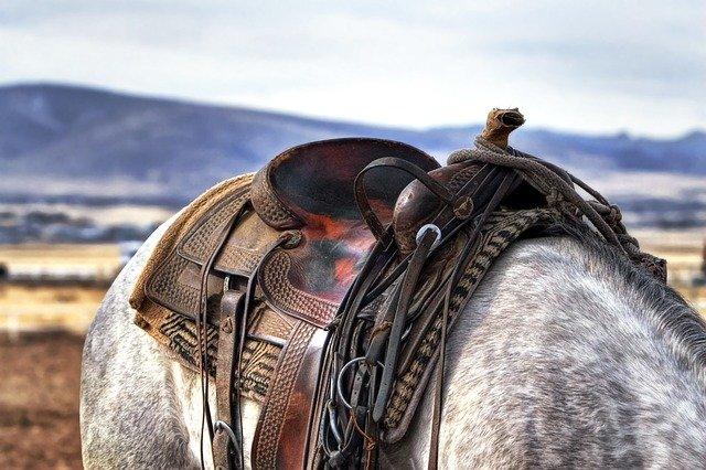 Le choix de la selle pour votre cheval