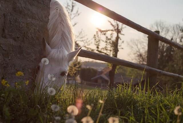Le cheval et son régime alimentaire