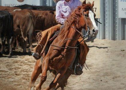 L'équitation : qu'est-ce que c'est?